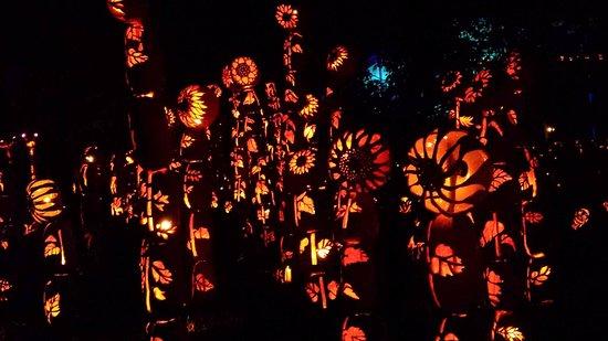 Croton on Hudson, NY: Blaze