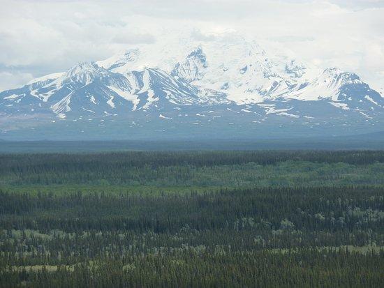Alaska Life & Glacier Tours Picture of Alaska Life & Glacier Tours