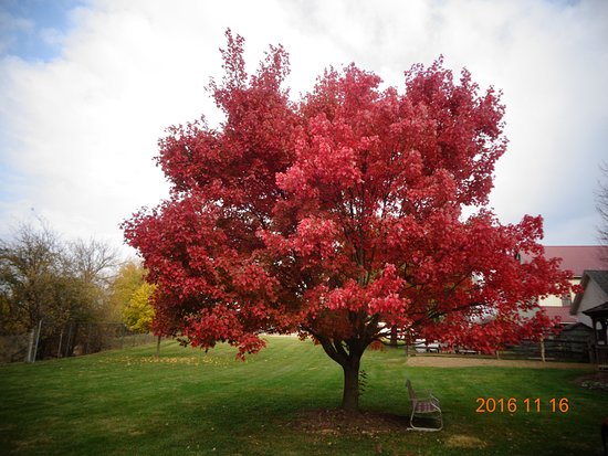 Strasburg, PA: Beautiful time of year to view the changing of colors