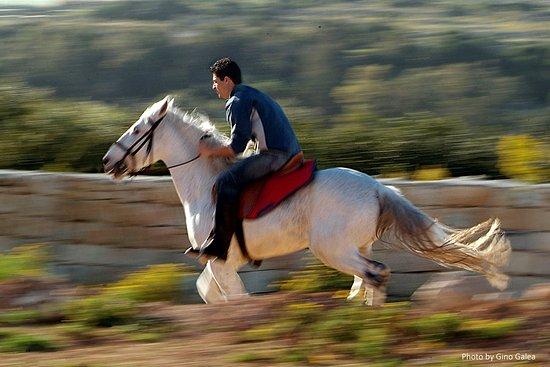 Horseriding- MALTA - Photography by 'GINO GALEA PHOTO ARTIST' STUDIO  #Malta#Wedding#Photographe