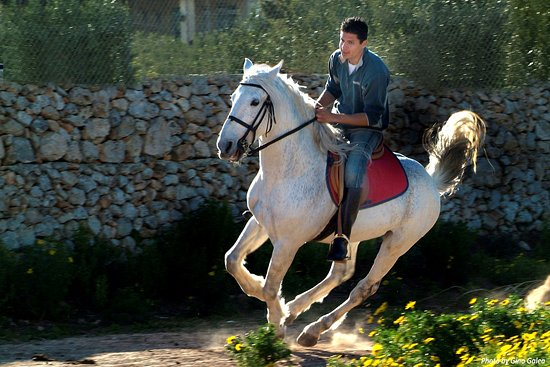 Horseriding, MALTA - Photography by 'GINO GALEA PHOTO ARTIST' STUDIO  #Malta#Wedding#Photographe