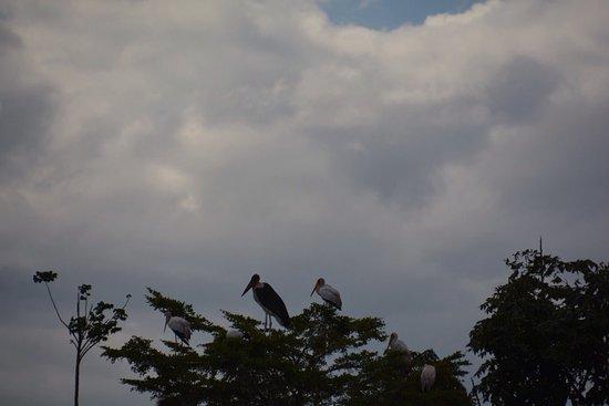 Dunga Bay: photo3.jpg