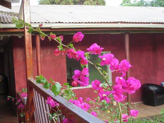 Kahina Lodge : Nice bougainvillea