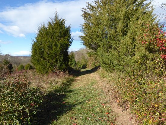 Loudoun County, VA: Trails