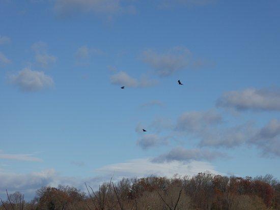 Loudoun County, เวอร์จิเนีย: Circling Birds