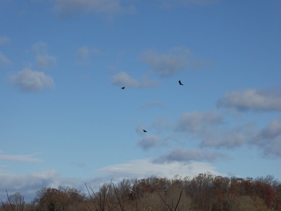 Loudoun County, VA: Circling Birds