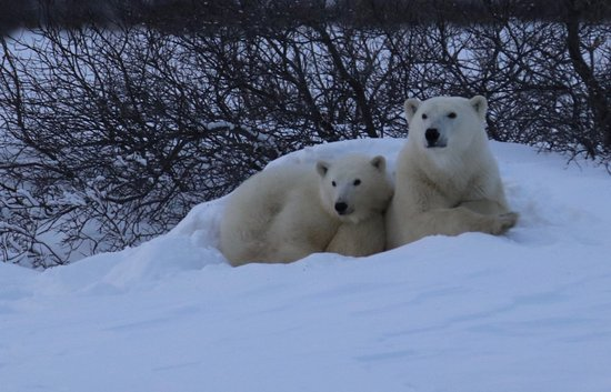 Seal River, Canadá: mom and cub looking us over