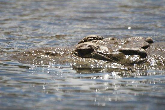 Santa Barbara, Costa Rica: Tarcoles Crocodiles & Birdwatching Tour