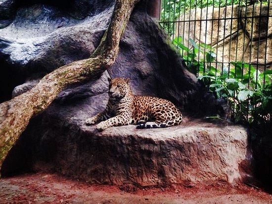 Santa Barbara, Costa Rica: Wildlife Sanctuary at the La Paz Waterfall Gardens