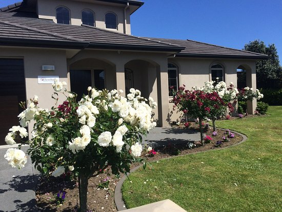 Papamoa, New Zealand: Stunning roses!