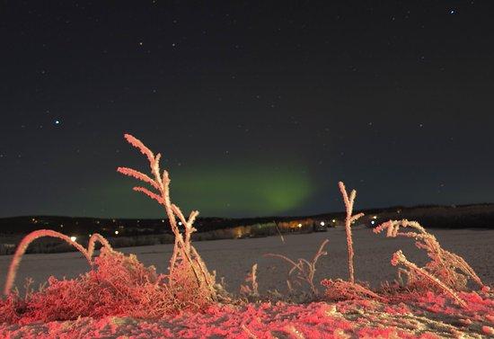 Alaska Northern Lights Tour : The photo on the way home