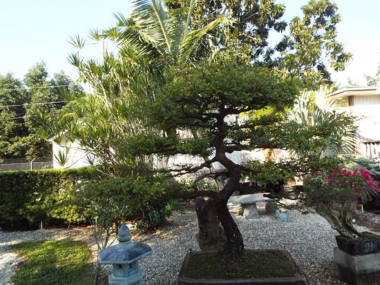 Bonsai Garden Picture of Miami Tropical Bonsai Miami TripAdvisor