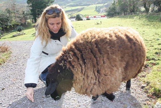 Kenmare, Irlanda: Interactuar con los animales es posible en Molly Gallivan's