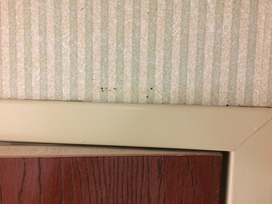 Holiday Inn Express Middletown / Newport: photo2.jpg