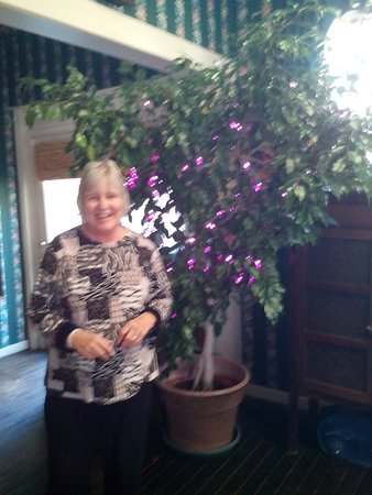 Abbeville, Carolina del Sud: Karen with her ficus tree draped in purple twinkle lights, in the kitchen! SO FUN!