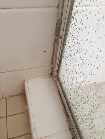 Essendon, Australia: The filthiest place I have ever stayed in