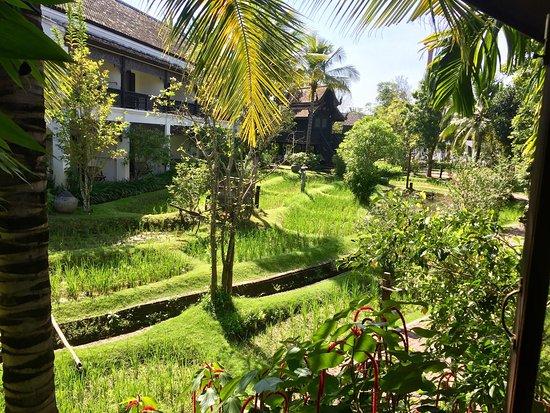 Saraphi, Tajlandia: photo2.jpg
