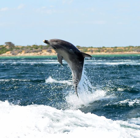 Kingscote, Austrália: yippee