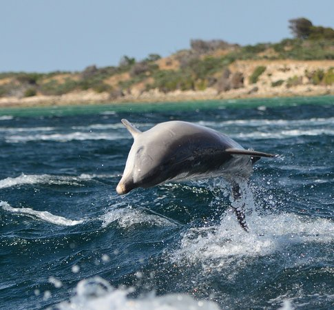 Kangaroo Island Marine Adventures: wow