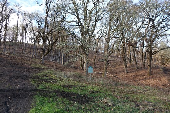 Corvallis, OR: Hillside has been recently thinned in an attempt to recreate oak savanna.
