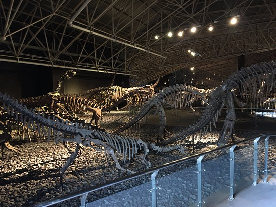 Lufeng Dinosaur Valley : fossil skeletons