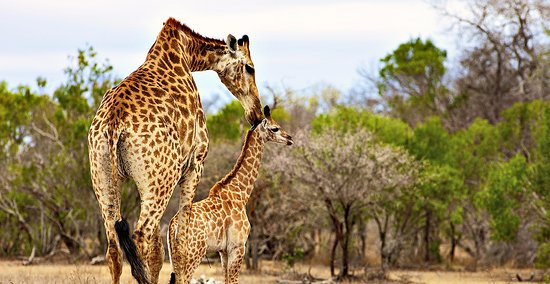 this is from african safari, and it would be a great experience to visit africa,