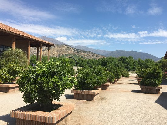 Santiago Metropolitan Region, Chile: The territory of the winery is very well maintained, clean, spacious and no people except us.