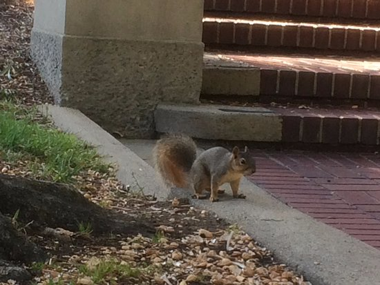 University of California, Berkeley: Many animals are living there