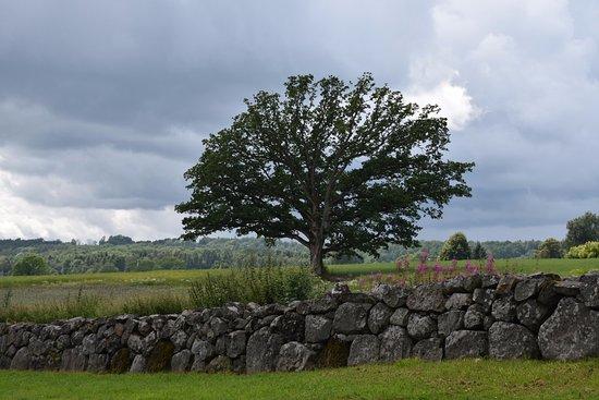 Midgard Historical Centre: Borre Nasjonalpark
