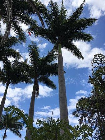 Conservatoire Botanique National de Mascarin: photo0.jpg