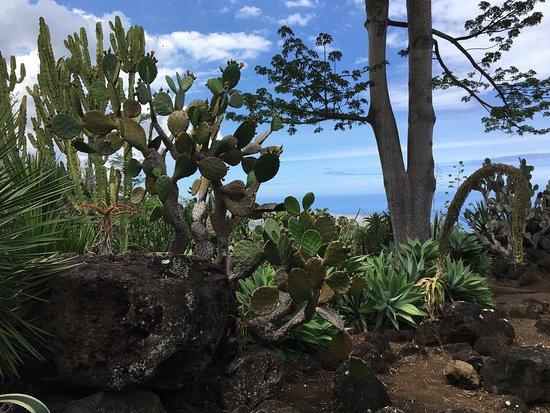 Conservatoire Botanique National de Mascarin: photo2.jpg