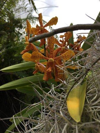 Conservatoire Botanique National de Mascarin: photo3.jpg