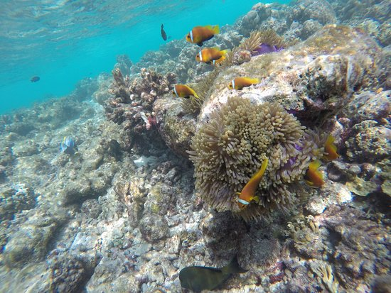 Shadow Palm Hotel: Underwater life of the Indian Ocean
