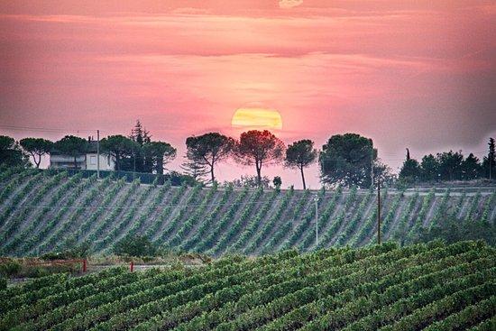 Certaldo, İtalya: Breathtaking views from the villa