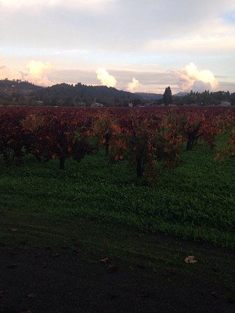 David Fulton Winery: photo3.jpg