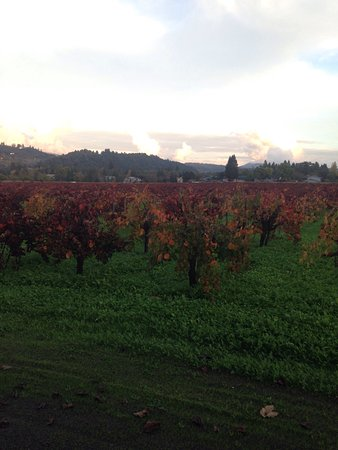 David Fulton Winery: photo4.jpg