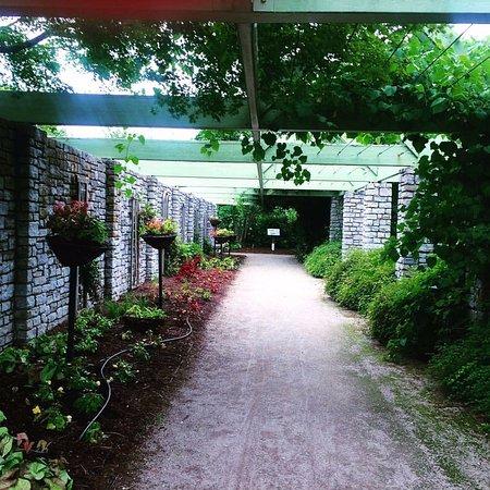 The Arboretum : Hanging garden