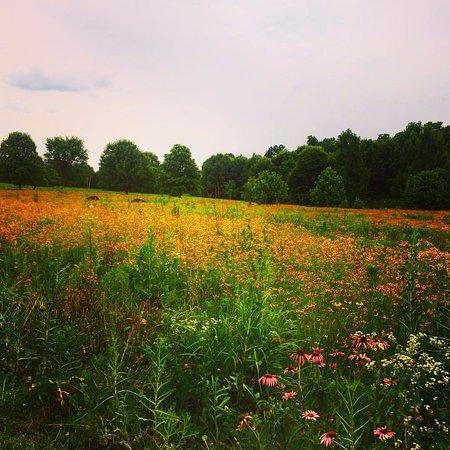 The Arboretum : grassland area