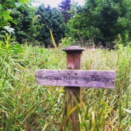 The Arboretum : rainwater garden