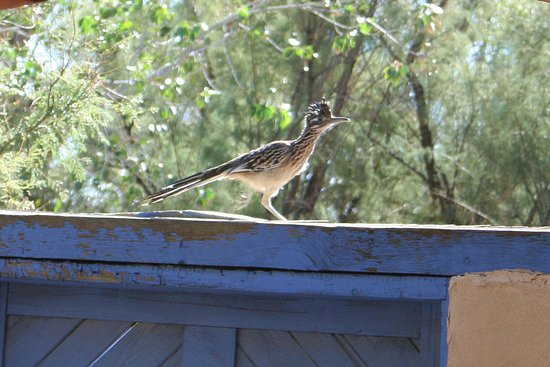 Sandhill Crane Bed and Breakfast: Even the Roadrunners Stay Here