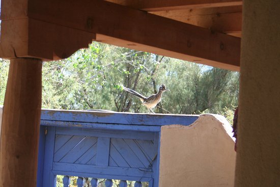 Corrales, Nuevo Mexico: Beep Beep! (It's a Roadrunner on the Wall)