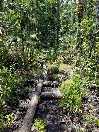 Isla Popa, Panama: Hike through the jungle in Popa 2