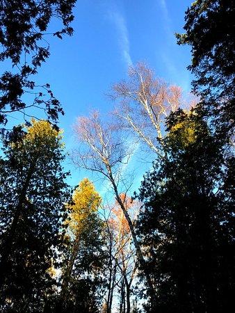 Wagon Trail Campground : photo0.jpg
