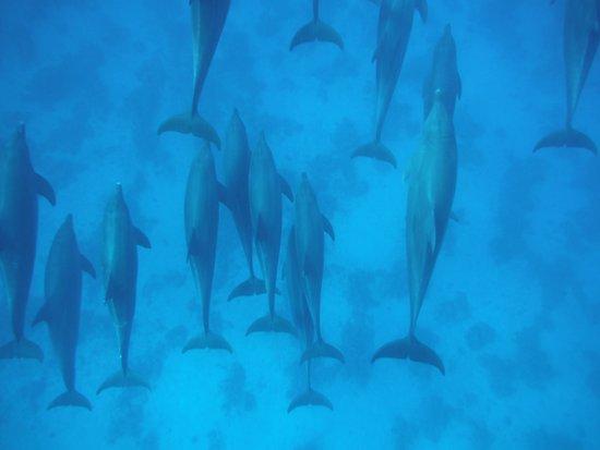 SENTIDO Palm Royale Soma Bay: Dolphin trip