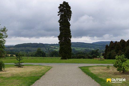 County Wicklow, Ireland: Beautiful Tree