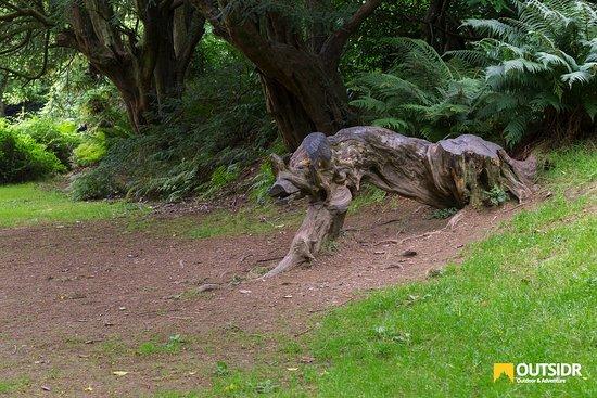 County Wicklow, Irlanda: The Beast