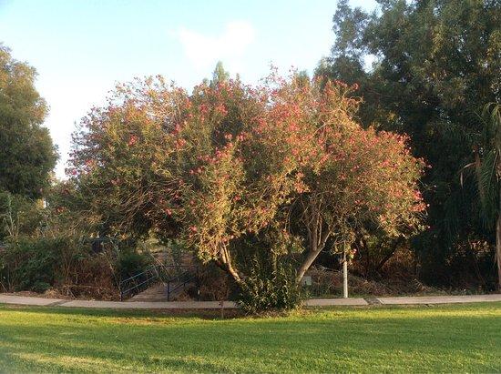 Ginosar, Israel: photo1.jpg