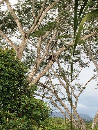 Hotel Horizontes de Montezuma: Ingang + zicht vanaf ons balkon