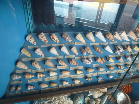 North Fort Myers, FL: Some shells