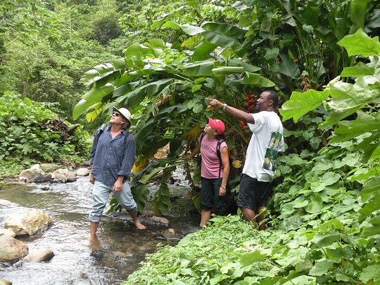 Saint George Parish, Grenada: Hiking Tufton Hall
